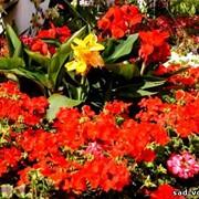 Многолетний цветник фото