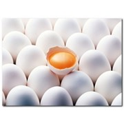 Яйцо куриное оптом фото