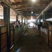 Конный завод «Ахал – Теке МиД РК» фото