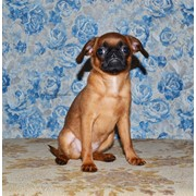 Puppy broabanson фото