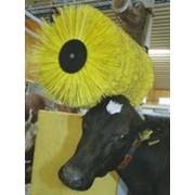 Вращающаяся щетка для коров фото