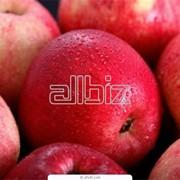 Яблоки свежие фото