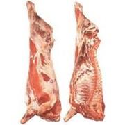 Мясо говядины тушами и полутушами фото