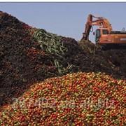 Утилизация пищевой продукции фото