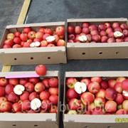Яблоки (сорт Имант, Вербное, Алеся) фото