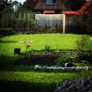 Устройство рулонного газона, посевной газон фото