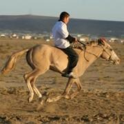 Микрочипирование лошадей фото