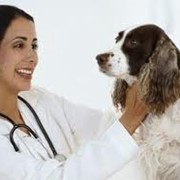 Услуги ветеринарные фото