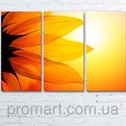 Модульна картина на полотні Великий сонях код КМ6090-069 фото