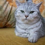Кошечка ищет котика фото