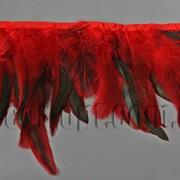 Перо-юбка красная с черными хвостиками 15-20см/48-50см 570823 фото