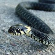 Борьба со змеями фото