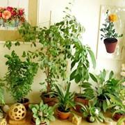 Профессиональный уход за растениями фото