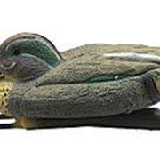 Чучело чирка плавающего (селезень) (24 шт./уп.) фото