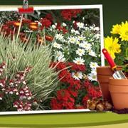 Семена цветов многолетники фото