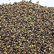 Клевер луговой красный семена фото