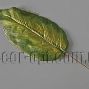 Лист дифенбахии с золотом 21/52 см 000374 фото