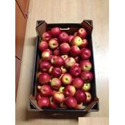 Яблоки польские фото