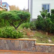 Посадка деревьев фото