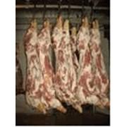 Мясо свинины замороженное производства Польши. фото