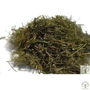 Амми зубная трава. фото