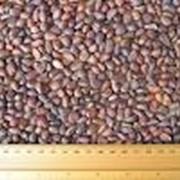 Кедровый орех фото