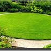 Озеленение сада, участка фото