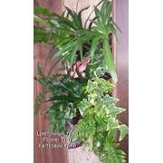 Вертикальное озеленение живыми растениями (качественно и не дорого) фото