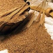 Отруби пищевые и кормовые по 20 кг и 35 кг, Одесская область фото