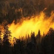 Пенное средство пожаротушения многоцелевого назначения для очистки и превентивной защиты от возгорания BIOVERSAL фото