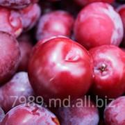 Toate soiurile de prune in Moldova фото