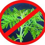 Уничтожение сорняков фото