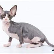 Продажа котят фото