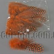 Перья оранжевые с горохом 5-10 см ~50 шт 570400 фото