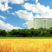 Заготовка, сушка, хранение семенного зерна от компании Хлебная база №76 фото
