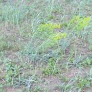 Борьба с сорной растительностью . фото