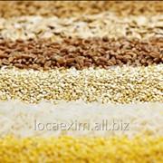 Хранение зерновых культур (Servicii de depozitare a cerealelor) фото