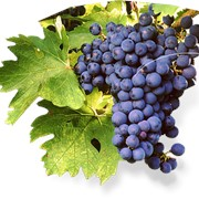 Саперави виноградный сок фото