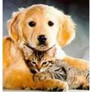 Вакцинация кошек и собак фото