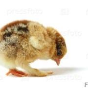 Комбикорм для цыплят бройлер рост от 20дн от 1 кг фото