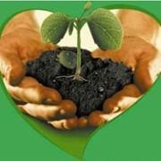 Регулятор роста Церон 48%, в.р. Bayer CropScience фото