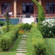 Ландшафтное озеленение фото
