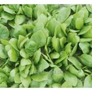 Семена шпината, Спирос F1, Bejo-Голландия, упаковка (50000 cем.) фото