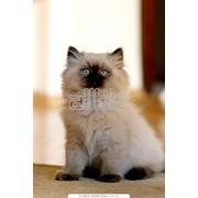 Лечение заболеваний собак и кошек фото