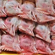 Головы куриные фото
