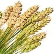 Гидролизованные протеины пшеницы 50 мл фото