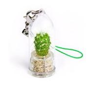 Сияние Minicactus брелок с живым растением фото