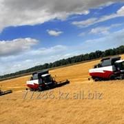 Зерновые культуры фото