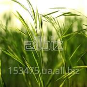 Грин Экспресс дистрибьютор средств защиты растений, пестицидов и гербицидов фото