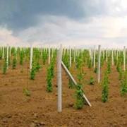 Столбики виноградные железобетонные фото